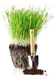 trawy zieleni zmielony korzeni łopaty narzędzie Zdjęcia Royalty Free