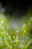 Trawy zielona woda opuszcza tło Obraz Royalty Free