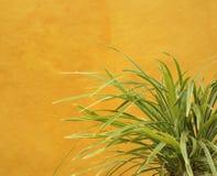 trawy zielonej rośliny kolor żółty zdjęcie royalty free