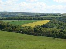Trawy ziemia Zdjęcia Royalty Free