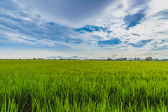Trawy ziemia Fotografia Stock