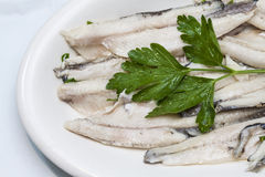 Tray of anchovies with parsley oil stock photos