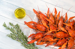 Tray with boiled crayfish Stock Images
