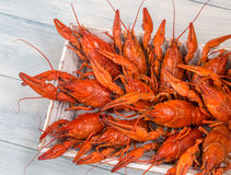 Tray with boiled crayfish Royalty Free Stock Images