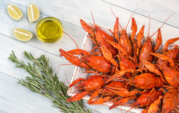 Tray with boiled crayfish Stock Photography