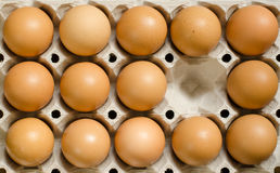 Tray of brown eggs. Brown eggs in a carton with an empty cell Royalty Free Stock Image