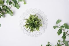 Tray Centered with Plant  and Leaves Flat Lay Top View. A Tray Centered with Plant  and Leaves Flat Lay Top View Royalty Free Stock Photo