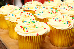 Tray of Cupcakes in Kitchen Stock Image