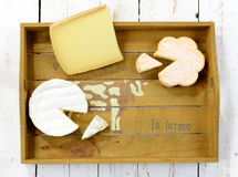 Tray different french cheeses Stock Image
