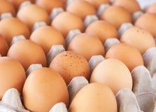 Tray of eggs. Full tray of freshly laid free range organic eggs Royalty Free Stock Images