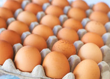 Tray of eggs Royalty Free Stock Photos