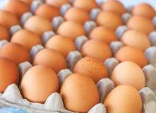 Tray of eggs. Full tray of freshly laid free range organic eggs Royalty Free Stock Photos
