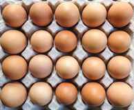Tray Eggs. Tray with nice large eggs Stock Photography