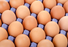 Tray of eggs in cardboard packing Stock Image