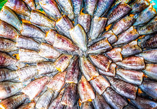 Tray of fish. A tray of fish decoratively arranged Stock Image