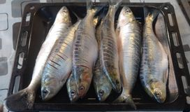 Tray of fish Royalty Free Stock Images