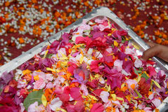 Tray of flower petals Stock Image