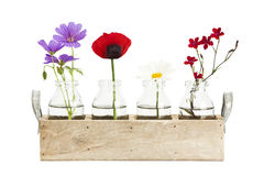 Tray with flowers in small bottles Royalty Free Stock Images