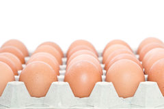 Tray of fresh eggs Stock Image