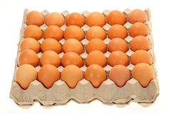 Tray Of Fresh Eggs Royalty Free Stock Image