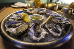 Fresh shucked oysters at a resaurant royalty free stock image