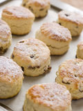 Tray of Fruit Scones royalty free stock images