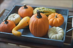 Tray full of Decorative Pumpkins Stock Photography