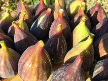 Freshly picked organic figs, green turning purple stock images