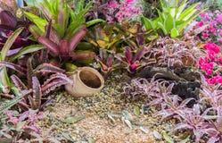 Tray garden Royalty Free Stock Photos