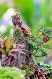 Tray garden decoration Stock Photography