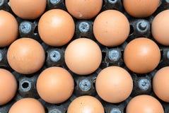 Tray of Hens Eggs Stock Photo