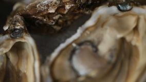 A tray of ice filled with oysters.  stock video footage