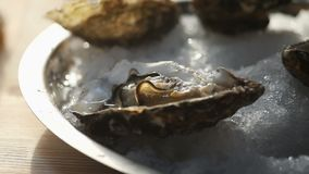 A tray of ice filled with oysters.  stock footage