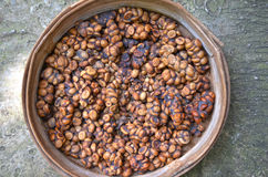 Tray of luwak poo containing digested coffee beans. Kopi luwak original coffee bean on bamboo tray Royalty Free Stock Image