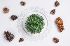 Tray with Pine Cones and Plant Flat Lay Top View. A Tray with Pine Cones and Plant Flat Lay Top View Stock Photography
