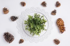 Tray with Plant and Pine Cones Flat Lay Top View. A Tray with Plant and Pine Cones Flat Lay Top View Stock Images