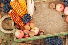 Tray with pumpkin and different ripe fruits and vegetables. Inside Royalty Free Stock Photography
