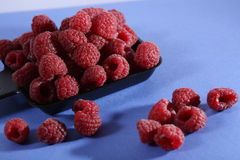 Tray of raspberries Stock Images