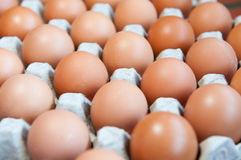 Tray of raw eggs Royalty Free Stock Photo