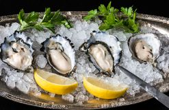 A tray of raw oysters Stock Photo
