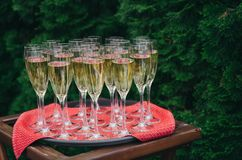 A tray with a red napkin and champagne at a wedding party on the street against the backdrop of greenery stock image