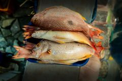Group of fish displayed in a market with unfocused background stock photos