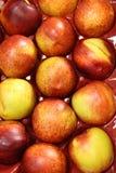 Tray of ripe and juicy nectarines Royalty Free Stock Photo