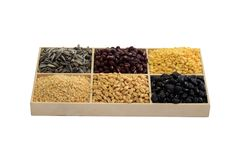 Tray of seed Royalty Free Stock Image