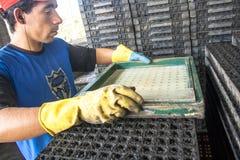 Tray with substrat Royalty Free Stock Photo