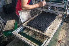 Tray with substrate Stock Photos