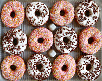 Tray of ring donuts stock photography