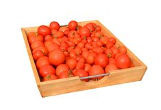 Tomatoes washed in tray Stock Images