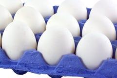 Tray of white eggs Stock Image