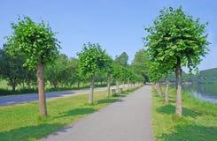 Trayectoria, árboles y la charca Fotografía de archivo